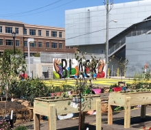 Commonwealth: Resiliency Garden